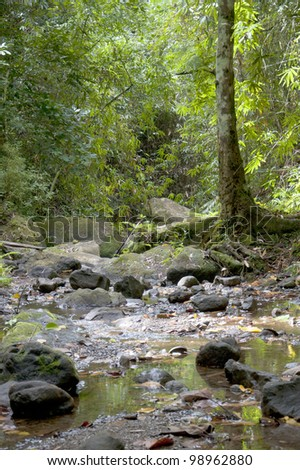 River in the jungle drying out during dry season on Panay island in the Philippines - stock photo