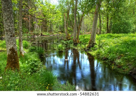 River in the wood in Sweden