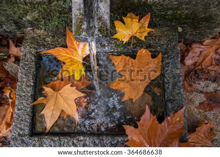 River source headwaters in autumn in the Monchique mountain region, Portugal. - stock photo