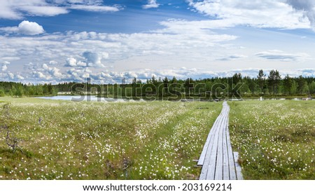 River swamp with cotton grass and wooden planks - stock photo