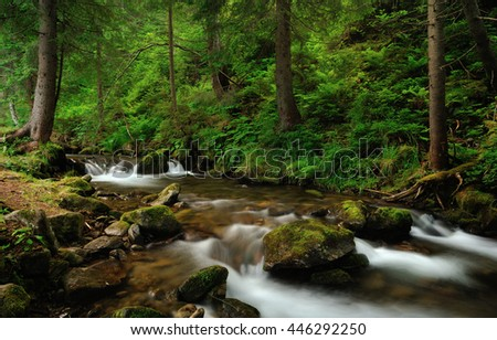 River with cascades and stones covered with moss in the green pine tree forest. Carpathian mountains, Ukraine.