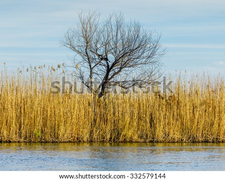 River with reed reflected in the Delta of the Volga River, Russia - stock photo
