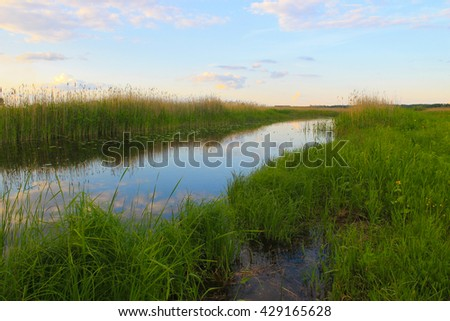 River with reeds on the shore