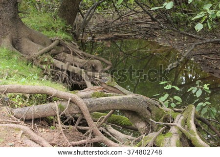 Riverbank with entwined tree roots  -  Mapleton Nature Park, Moncton, NB Canada