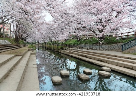 Riverside walkways under romantic Japanese cherry blossoms ( sakura namiki ) with beautiful reflections on smooth water & step stones across the small canal ~ Idyllic spring scenery in Saitama, Japan - stock photo