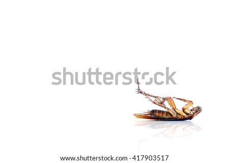Roach white background