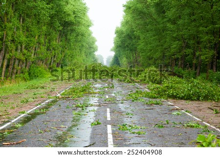 Road after the hurricane - stock photo