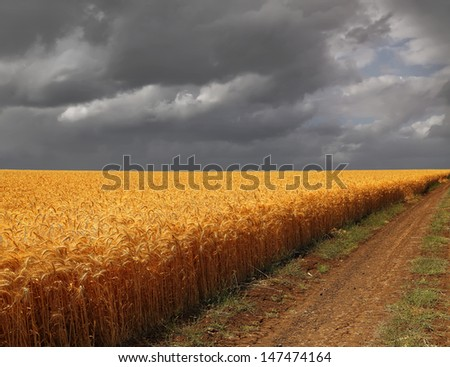 Road along edge of a wheaten field on the storm sky background - stock photo