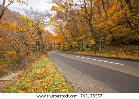 road along Oirase stream in autumn