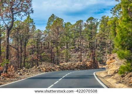 Road along the canarian pines in the Corona Forestal Nature Park, Tenerife, Canary Islands. - stock photo