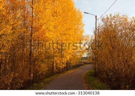 Road and colorful autumn foliage - stock photo