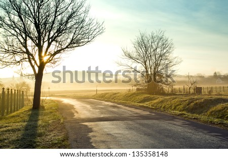 Road and fog and the silhouette of trees - stock photo