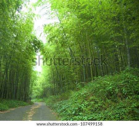 road and green bamboo forest - stock photo