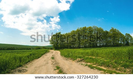 road and sowings of the winter wheat - stock photo