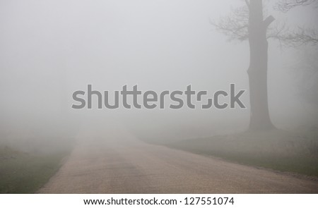 road and tree in fog - stock photo