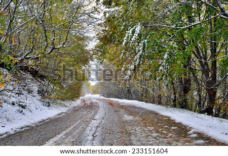 Road and trees covered with snow - stock photo