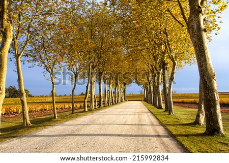 road at the provence, france  - stock photo