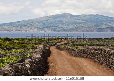 Road between vineyards. Old vineyards surrounded with stones are part of UNESCO world heriage. - stock photo