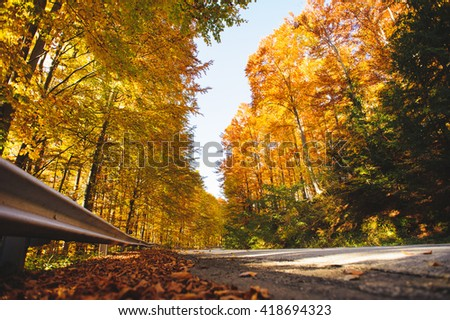 road coming through golden autumn forest