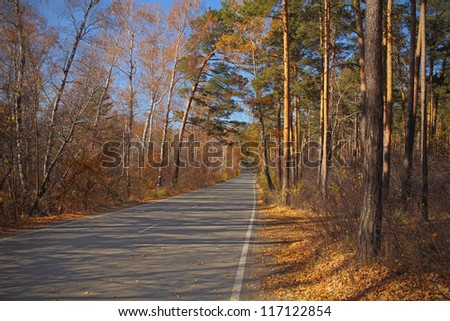 Road covered with yellow leaves - stock photo