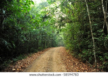 Road curving through the forest - stock photo