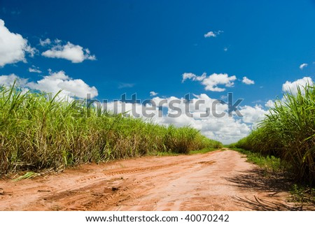 Road for the Sugar Cane Field. Brazil produces about one-third of the sugarcane production in the world. - stock photo