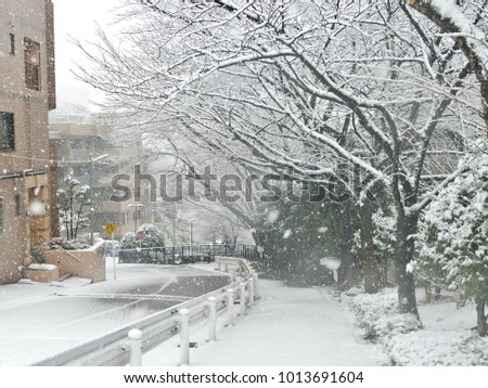 road from the hills around the residential area and sakura trees covered by heavy snow in Tokyo area in Japan