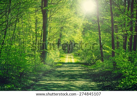 Road going through a green forest in the spring