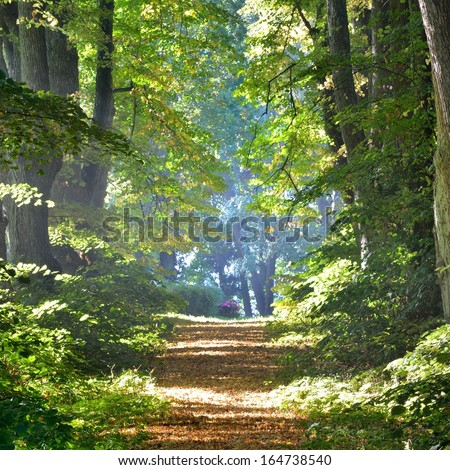 Road in a beautiful forest lane in the morning - stock photo