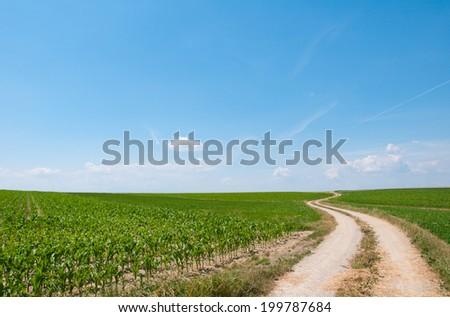 road in a rural landscape through cornfields in Austria - stock photo