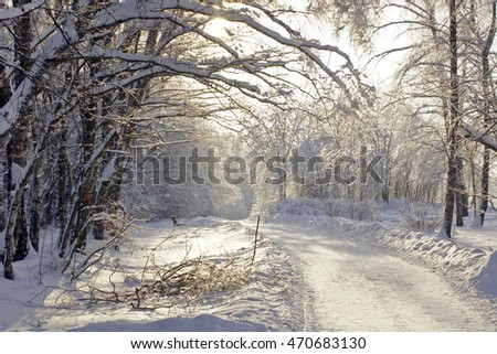 Road in a snowy forest.