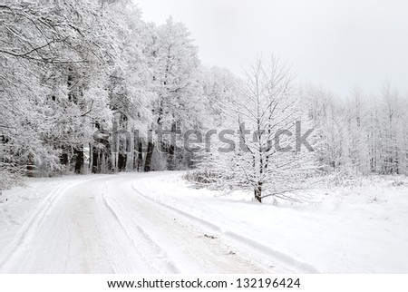Road in a snowy forest in winter - stock photo