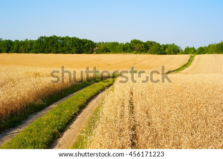 Road in a wheat field. Focus on foreground. Ukraine