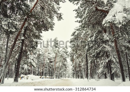 Road in a winter forest after snowfall. Beautiful winter landscape. Vintage effect - stock photo