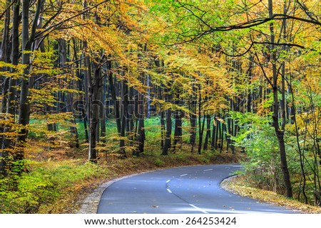 Road in autumn forest. Autumn landscape in Hungary - stock photo