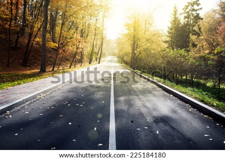 Road in autumn forest. Beauty nature background - stock photo