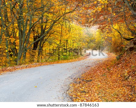 Road in autumn forest. Natural composition