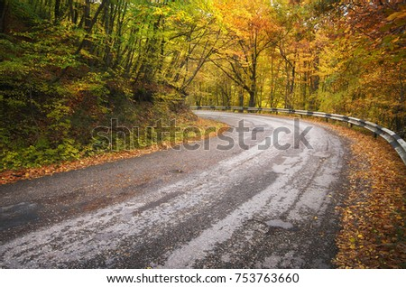 Road in autumn wood. Nature composition.
