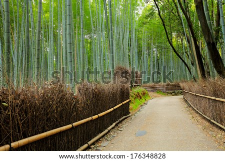 Road in Bamboo forest - stock photo