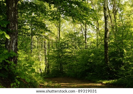 Road in birch forest in the spring - stock photo