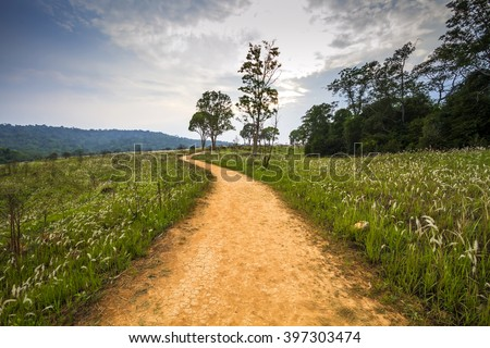 Road in green forest with sunset
