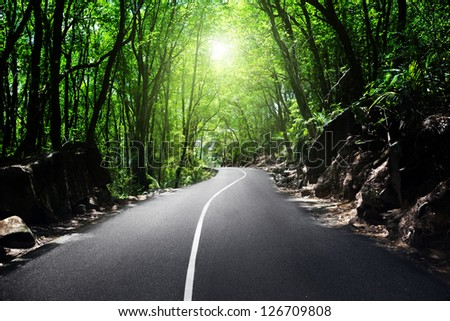 road in jungle of Seychelles - stock photo