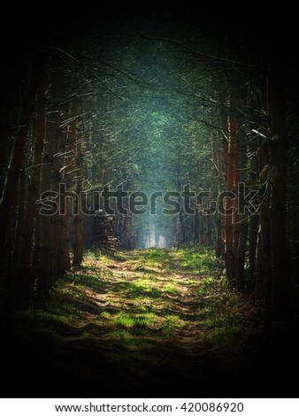 Road in magic dark forest, dark vignetting, mist background - stock photo