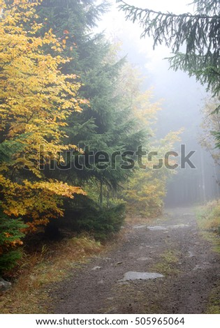 Road in misty forest