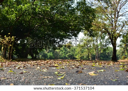 road in park/Autumn in the Park /Life and nature