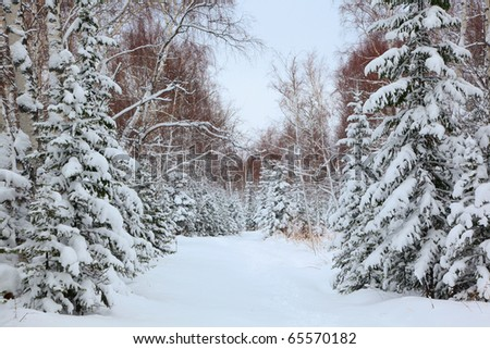 road in snowy forest, siberia - stock photo