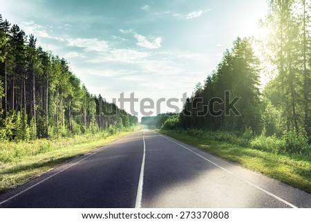 road in sunny forest - stock photo