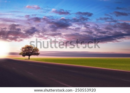 Road in sunset time in field - stock photo