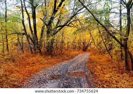 Road in the autumn forest after rain.