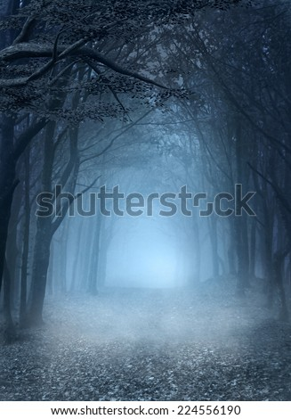 Road in the blue foggy forest - stock photo